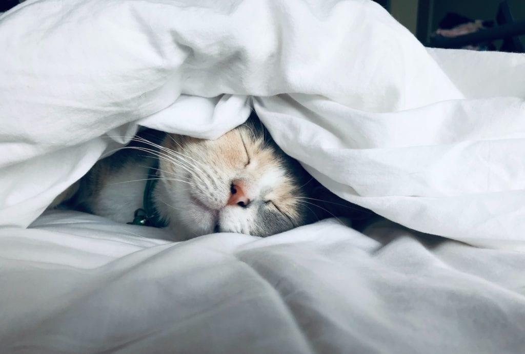 Low energy - sleeping cat